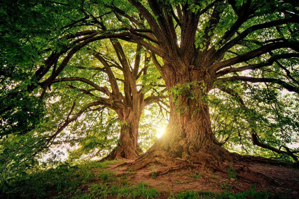 sunight through trees